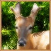 http://mitosa.net/avatars/100x100/enimals/Deer_ravensilvermoon.jpg
