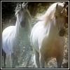 http://mitosa.net/avatars/100x100/enimals/UnicornLove_ravensilvermoon.jpg
