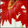 http://mitosa.net/avatars/100x100/flowers/flhot_bases4.jpg