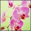 http://mitosa.net/avatars/100x100/flowers/flhot_bases5.jpg