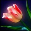 http://mitosa.net/avatars/100x100/flowers/flowers2.jpg