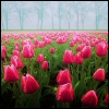 http://mitosa.net/avatars/100x100/flowers/flowers8.jpg