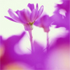 http://mitosa.net/avatars/100x100/flowers/purple_wildflowers.jpg