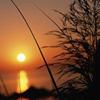 http://mitosa.net/avatars/100x100/priroda/sun1.jpg